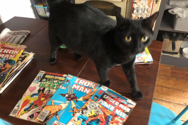 Get a Hobby: Zuzu on comics